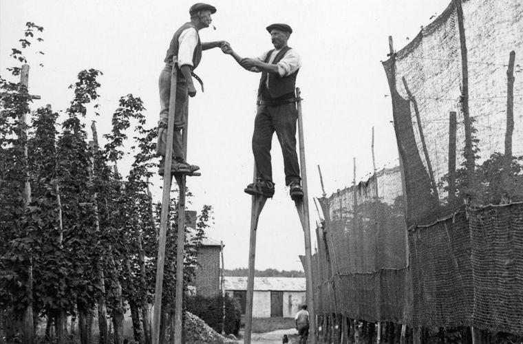 сборщики хмеля в графстве Кент 1928 год..jpg