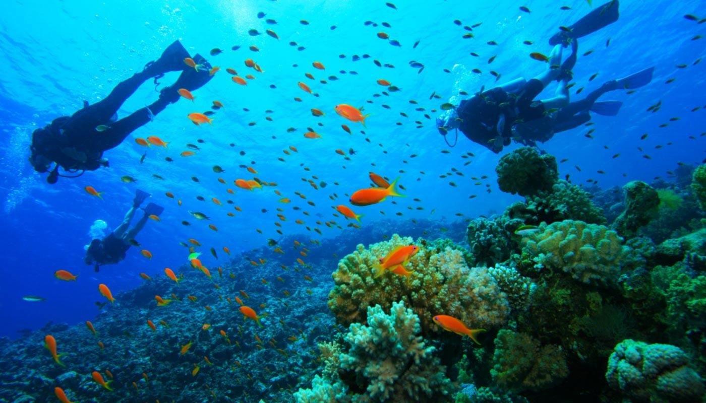 activities-corfu-scuba-diving-ipsos-corfu.jpg.87edc08c550a953f574c6a8693cc1044.jpg